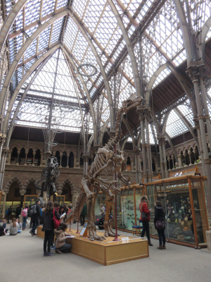 Oxford University Museum of Natural History -  voir en grand cette image
